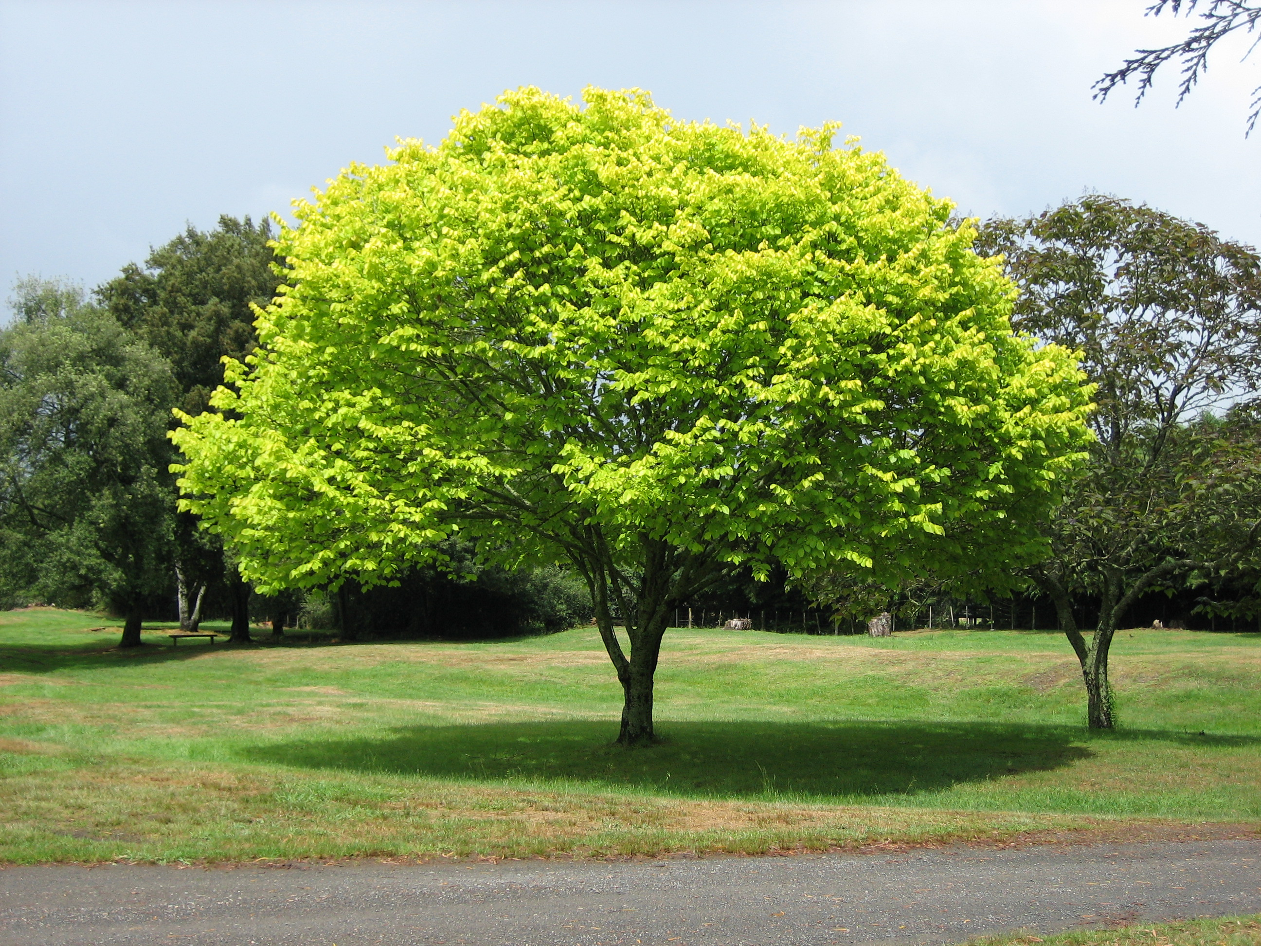 http://commercialtenantresource.files.wordpress.com/2010/01/bright_green_tree.jpg